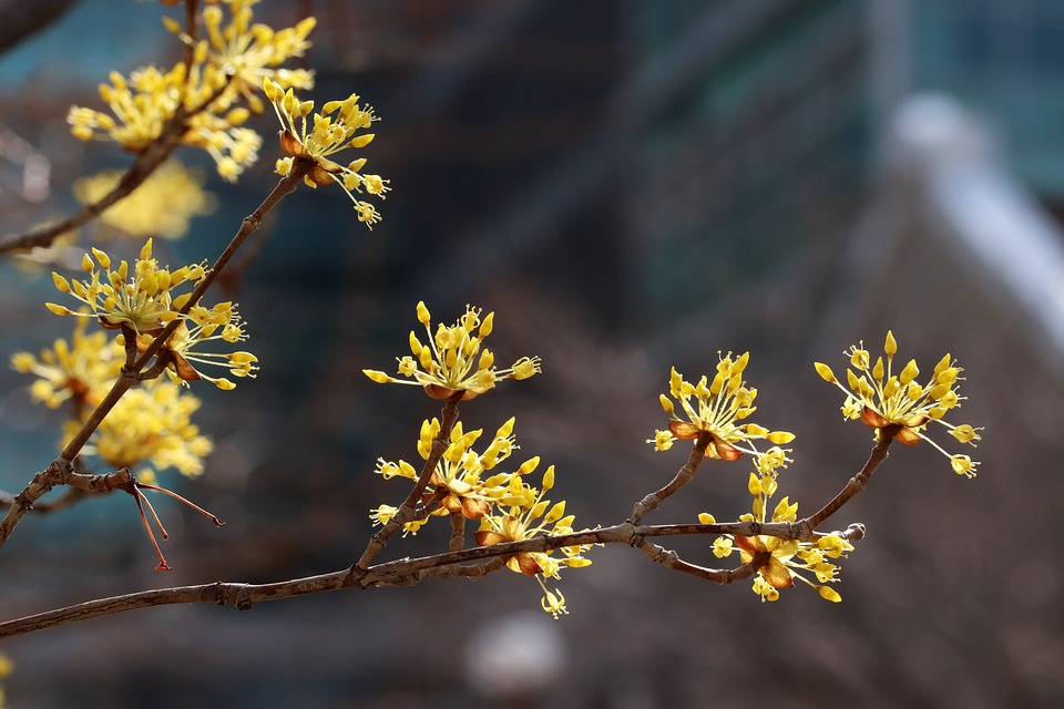 Spring, Spring Flowers, Nature, Flowers, Plants
