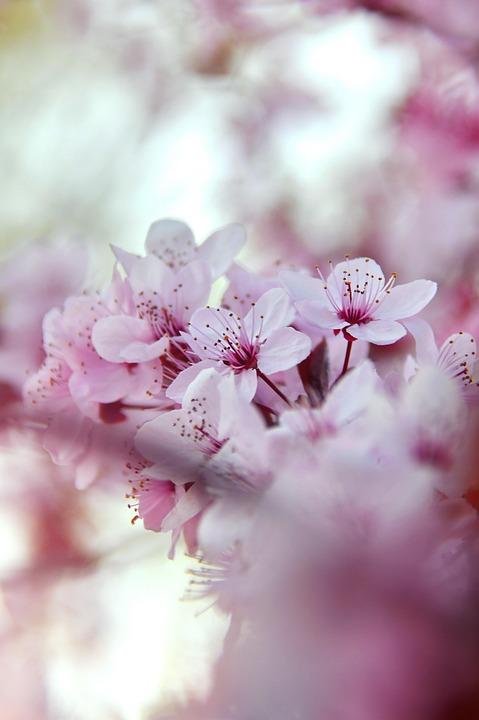 Spring, Spring Flowers, Pink, Pink Flowers, Fresh, Wood