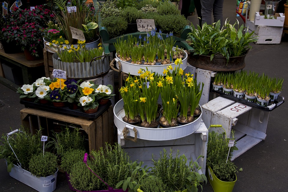 Flowers, Stand, Market, Spring, Green, Plant