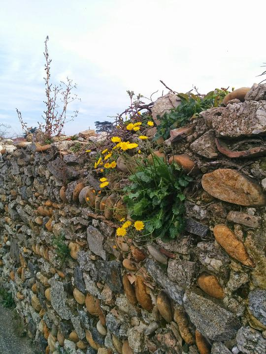 Wall, Flowers, Yellow, Nature, Spring
