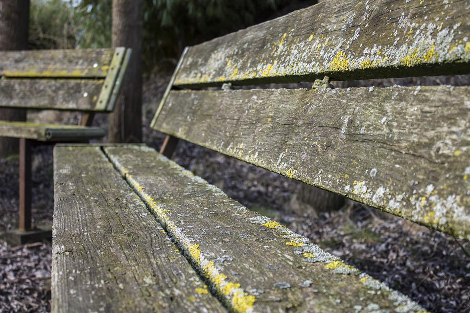 Bench, Forest, Spring, Nature, Wood, Furniture