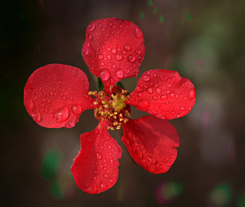 Flower, Red, Spring, Tree, Fruit, March