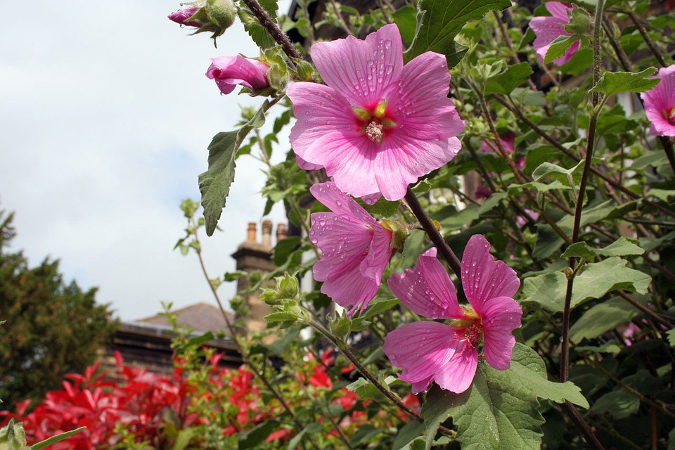 Flower, Flowers, Pink, Bloom, Blossom, Spring, Garden