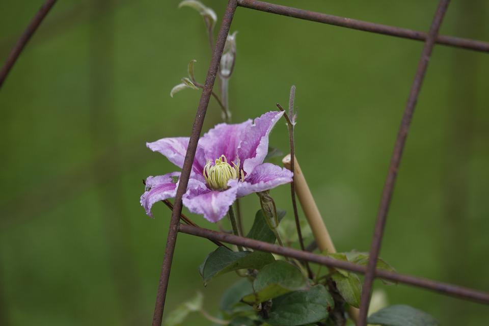 Flowers, Spring, Beauty, Flora, Plant, Garden