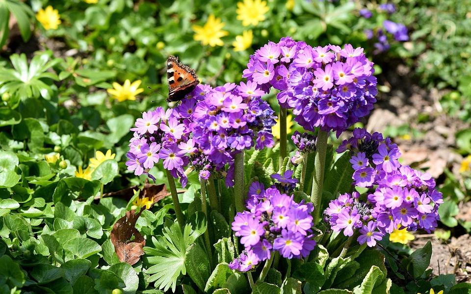Garden, Flowers, Spring, Spring Flowers, Plant