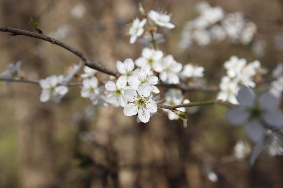 Spring, Flower, Nature, Flowers, Summer, Garden, Bloom