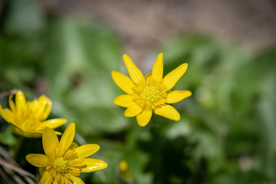 Flower, Yellow, Flowers, Small Flowers, Garden, Spring