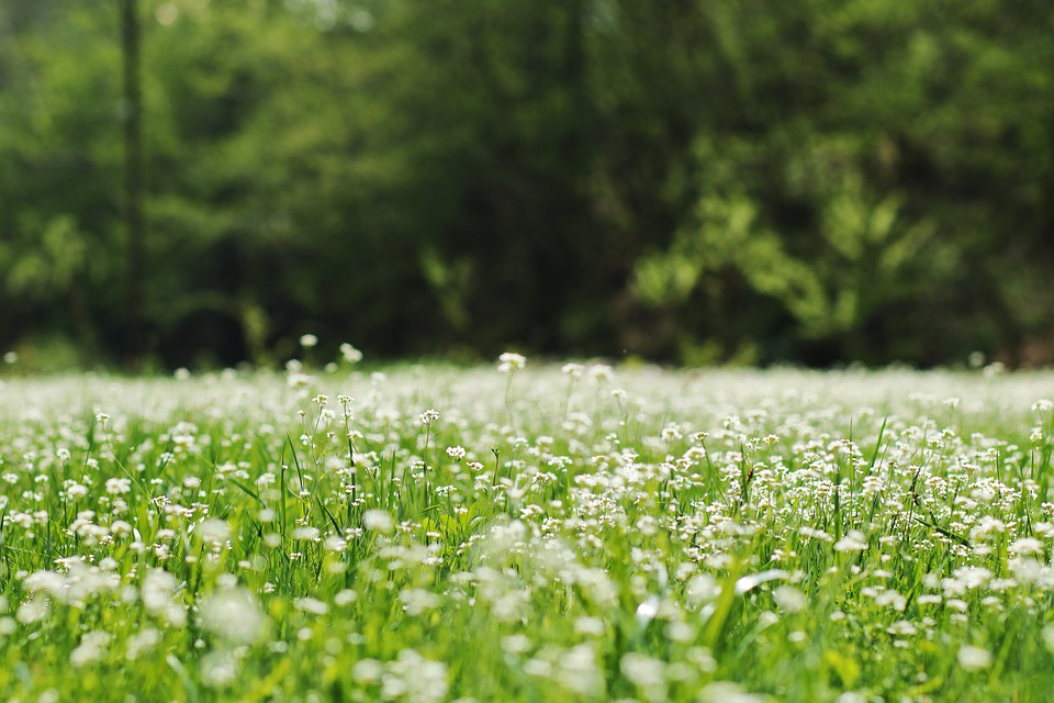 Meadow, Flowers, Nature, Flower, Field, Grass, Spring