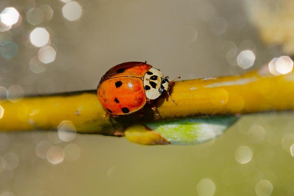 Spring, Garden, Ladybug, Nature, Close Up, Green