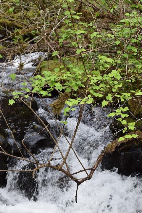 Stream, Splash, Green, Fresh, Spring, Creek, Flowing