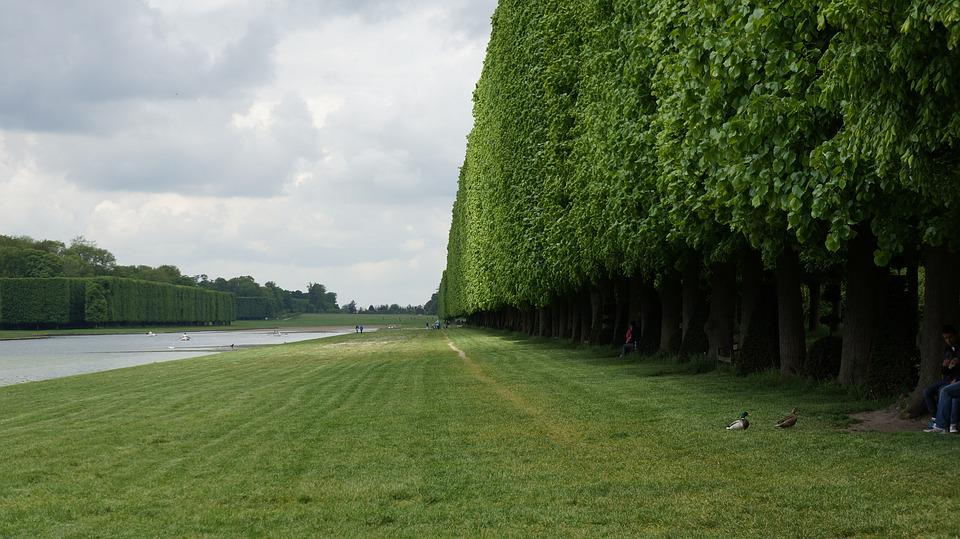 Grass, Tree, Trellis, Green, Nature, Spring, Park