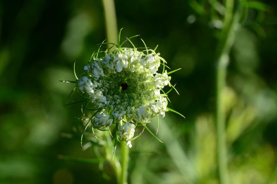 Flower, Green, Floral, Nature, Spring, Plant, Design