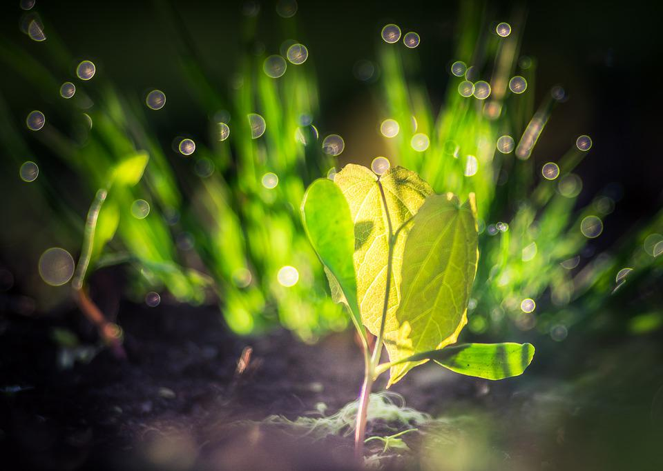Seedling, Life, Spring, Plant, Grow, Wake Up, Clone