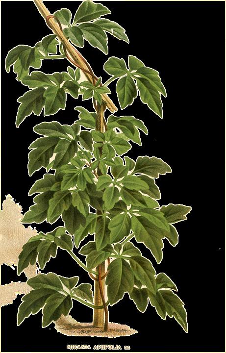 Plant, Green, Summer, Spring, Growth, Fresh, Foliage