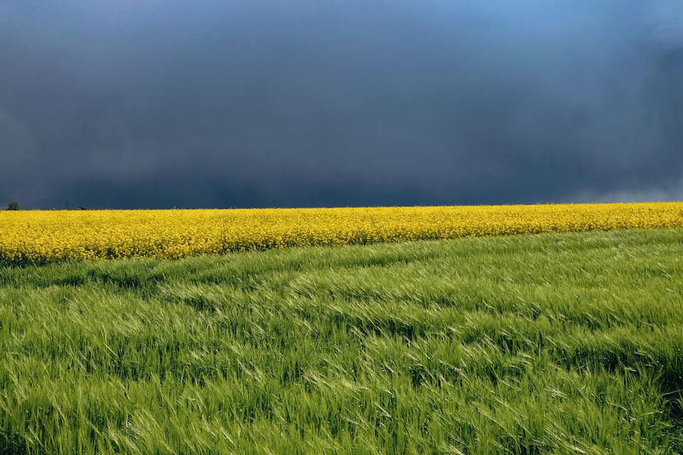 Nature, Landscape, Spring, Spring Image, Fields, Color