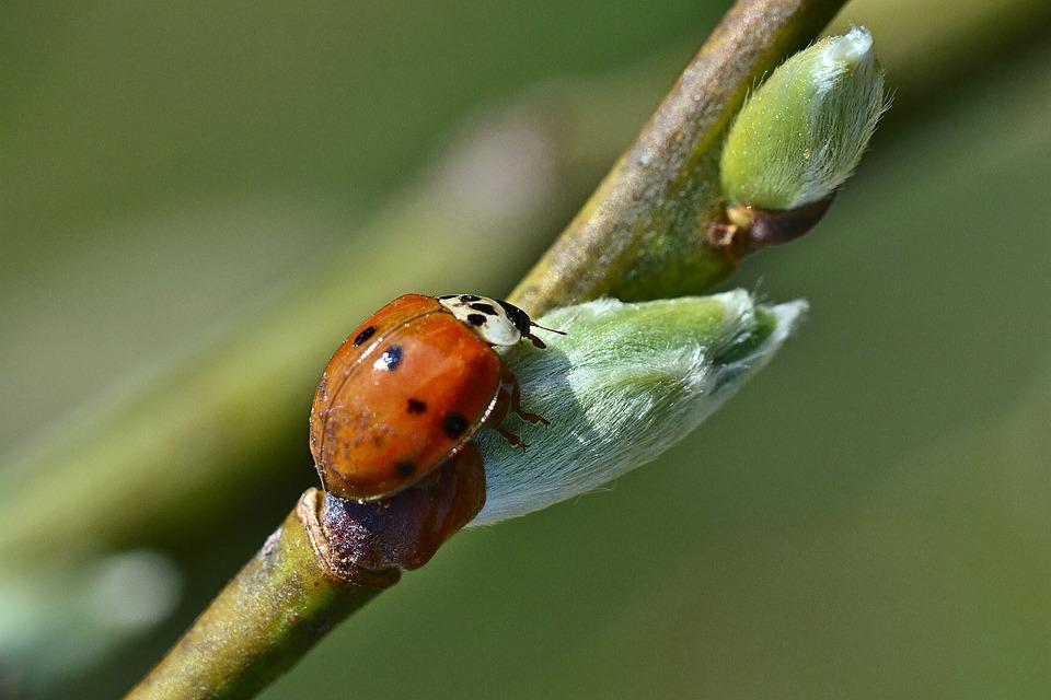 Spring, Ladybug, Nature, Insect, Garden, Color