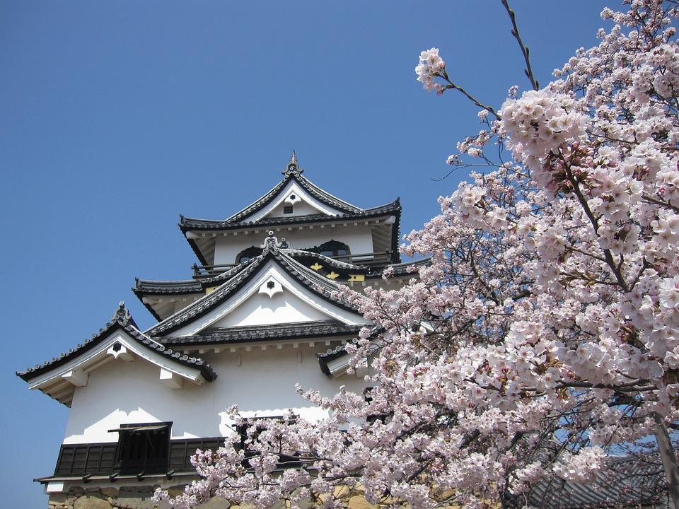 Cherry Blossom, Japan, Spring