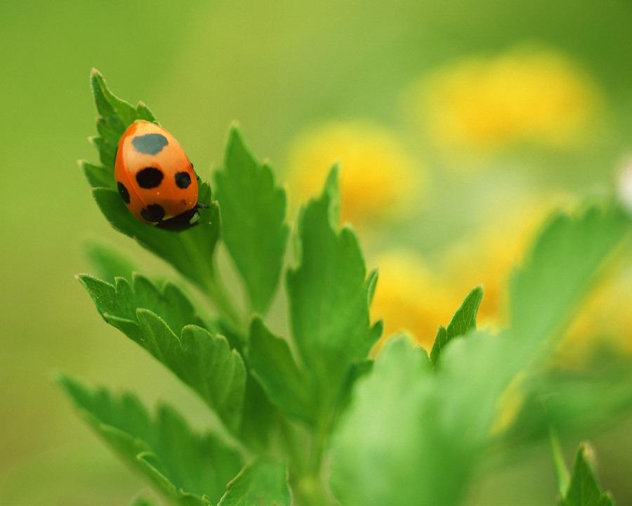 Ladybug, Spring, Abstract