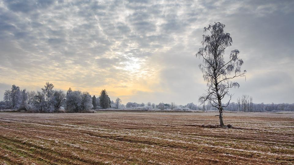 Wintry, Spring Lake, Bad Buchau, Cold, Icy, Ripe