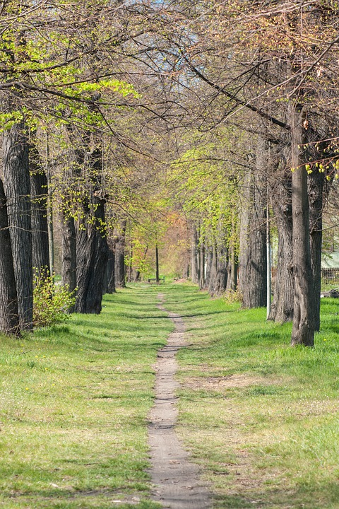 Away, Trees, Avenue, Spring, Path, Nature, Landscape