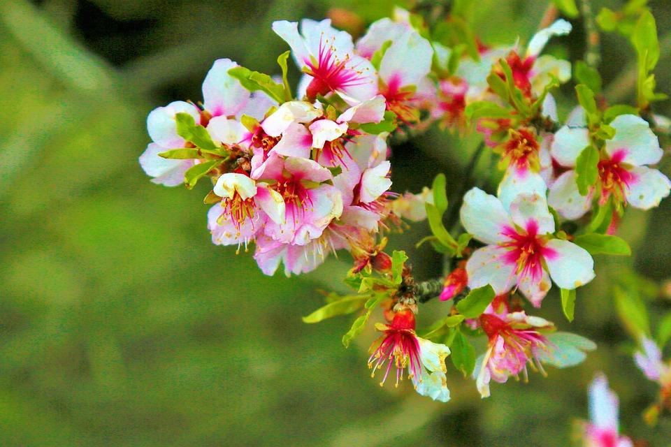 Flower, Spring, Nature, Leaves, Plant, Color, Pink