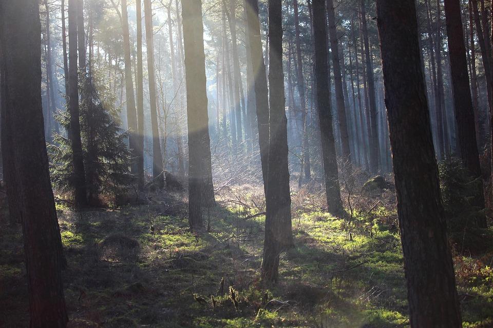 Forest, Spring, Green, Silent, Rest, Live, Lichtspiel