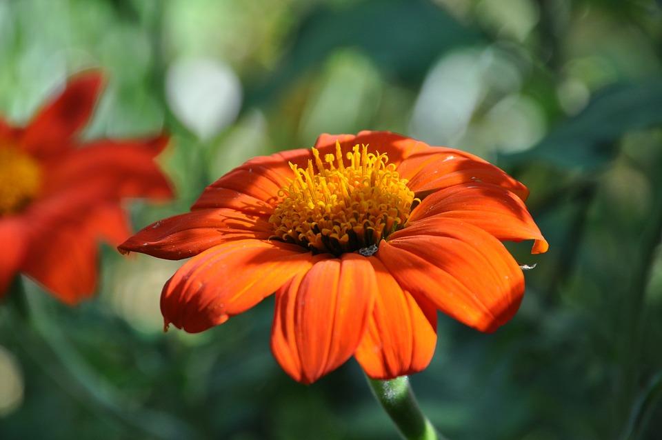 Marguerite, Daisy, Flowering, Spring, Nature, Garden