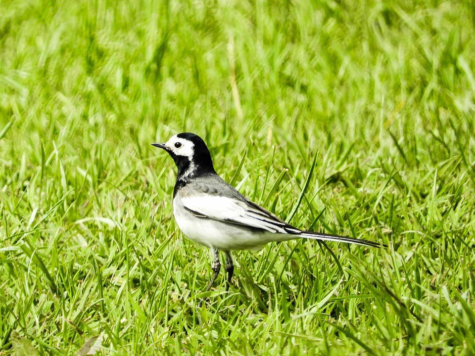 Nature, Bird, Spring, Black And White