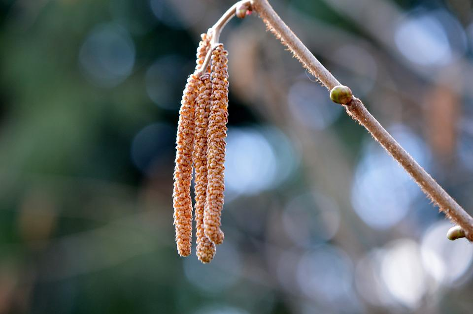 Nature, Plant, Close, Spring