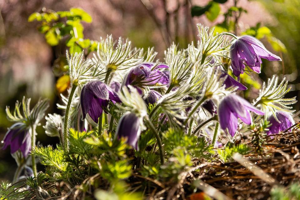 Flowers, Spring, Floral, Nature, Bloom, Blossom, Flora