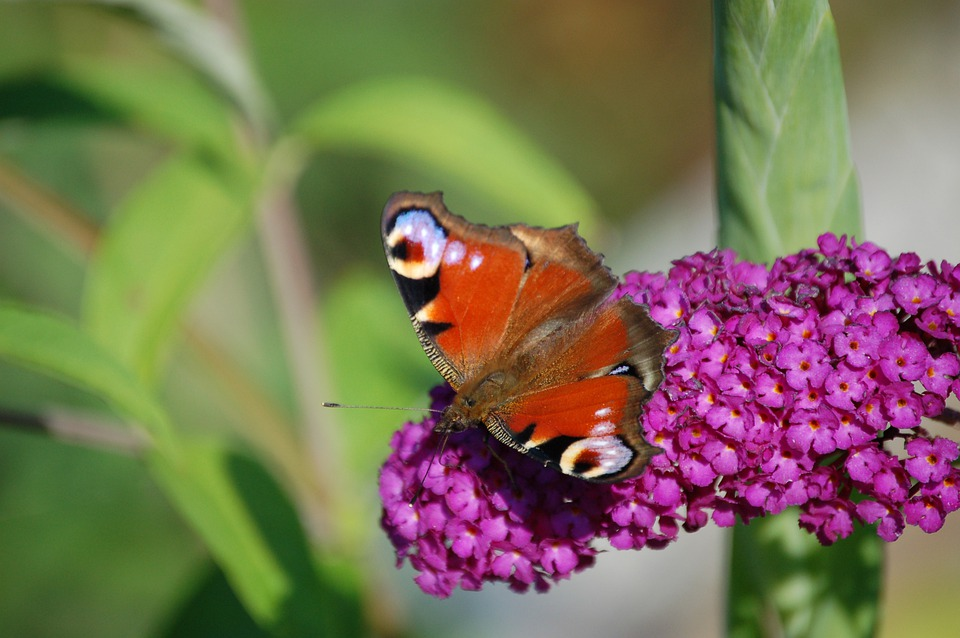 Butterfly, Flower, Insect, Nature, Spring, Kid Stories
