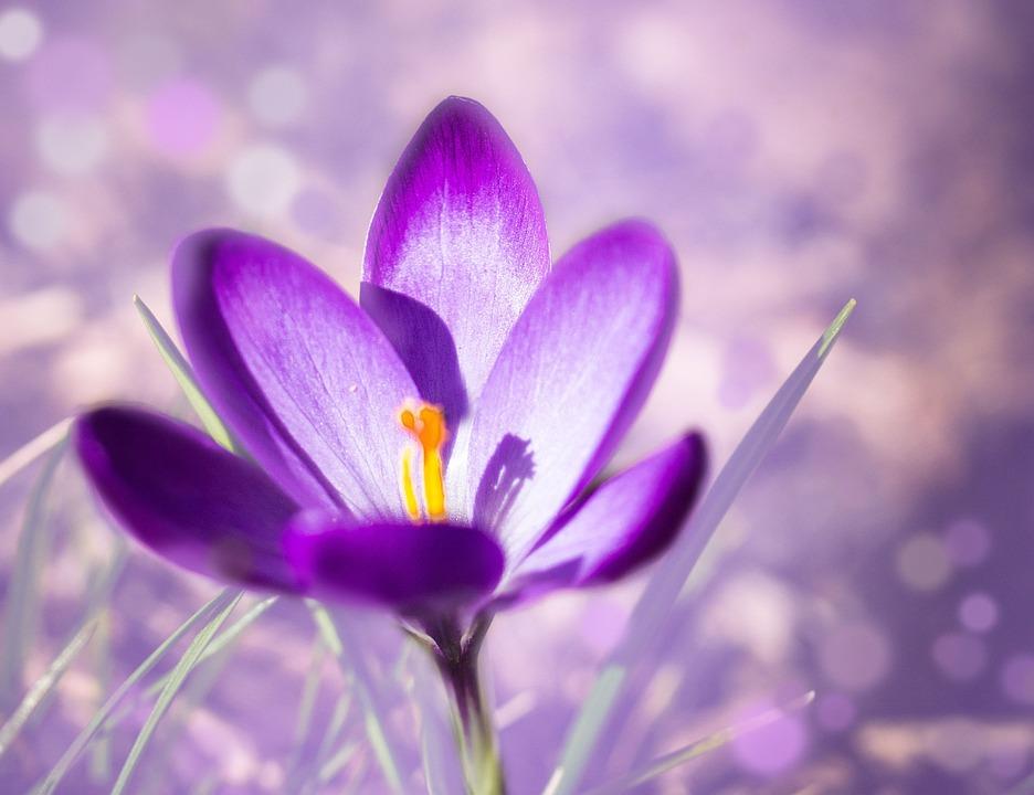 Nature, Spring, Flowers, Garden