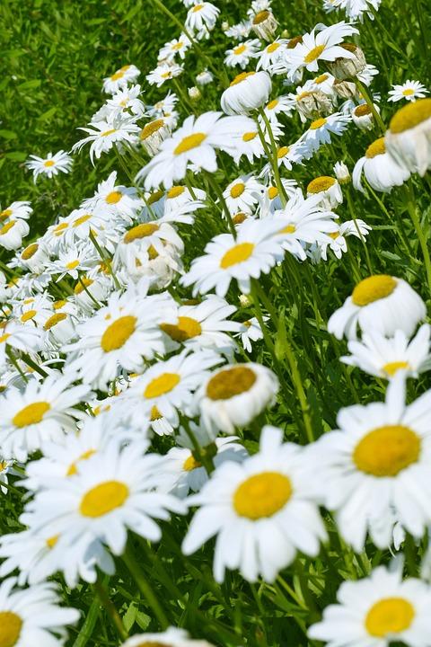 Flowers, Lawn, Summer, Flower, Spring, Nature, Garden