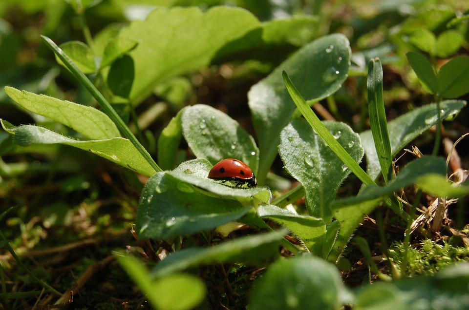 Ladybug, Green, Garden, Nature, Spring, Insect