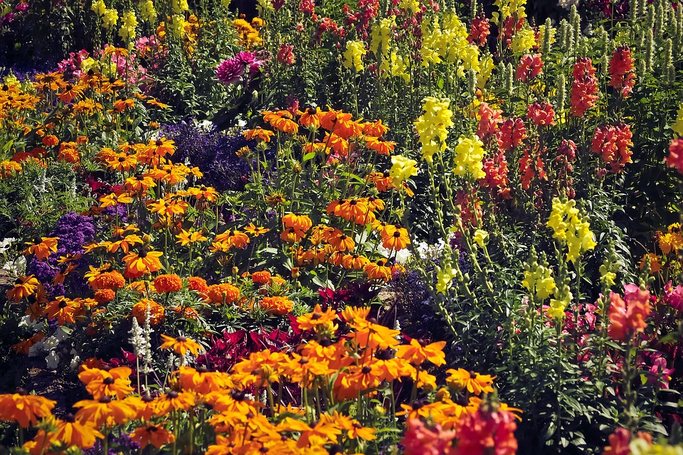 Flower Meadow, Flowers, Nature, Meadow, Spring
