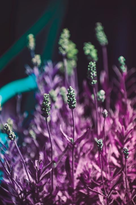 Plant, Flowers, Spring, Nature, Pink, Summer, Garden