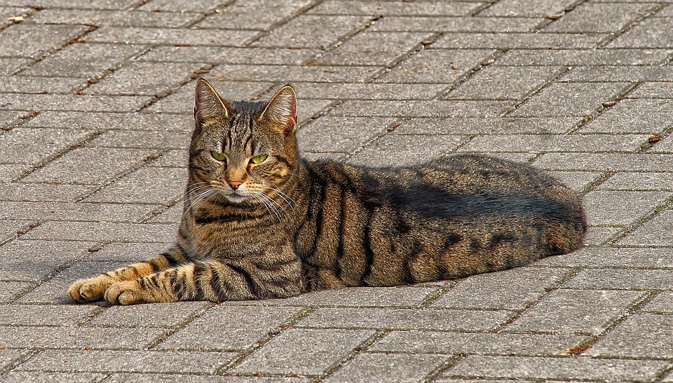 Nature, Animal, Domestic Cat, Spring, Relax, Female