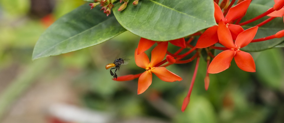 Flowers, Bees, Plant, Insects, Flower, Spring, Nectar