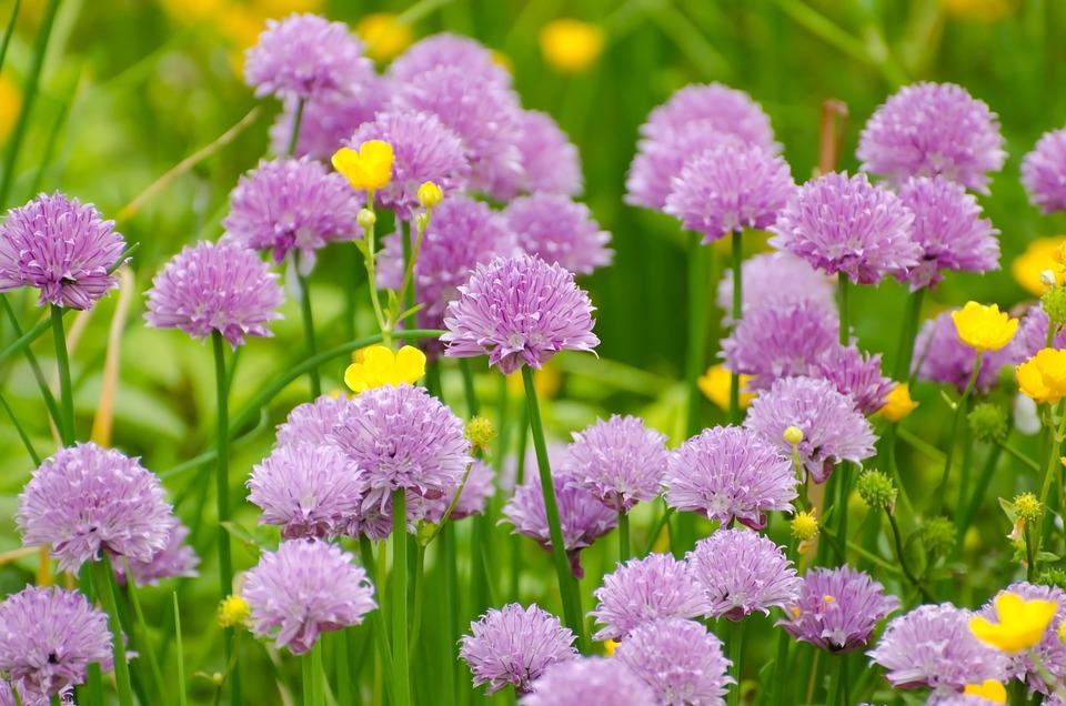 Flower, Summer, Spring, Gardening, Macro, Object