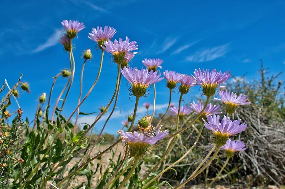 Purple Flowers, Sky, Spring, Blue, Outdoor
