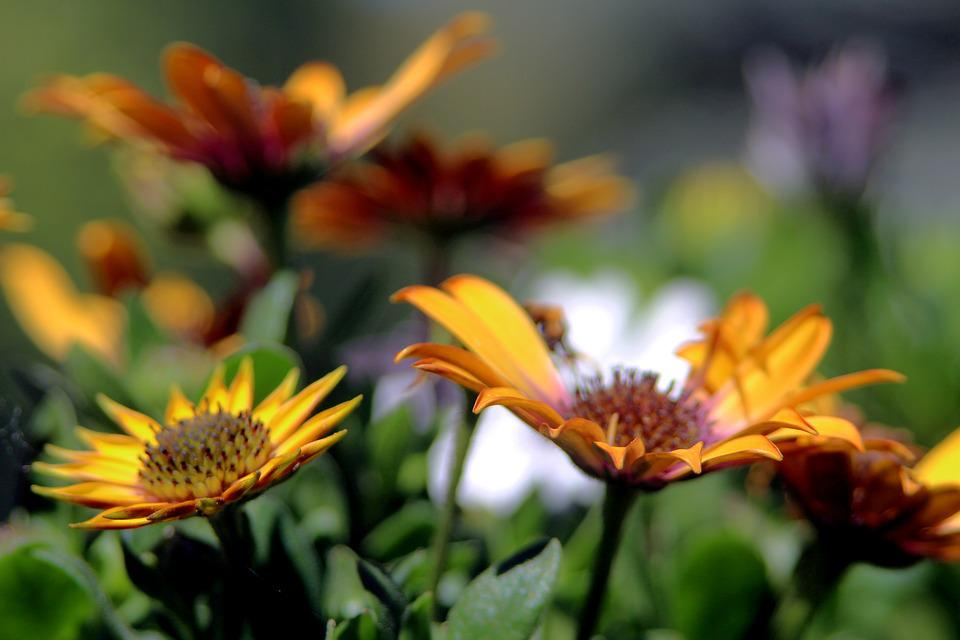 Flower, Macro, Spring, Close Up, Petal
