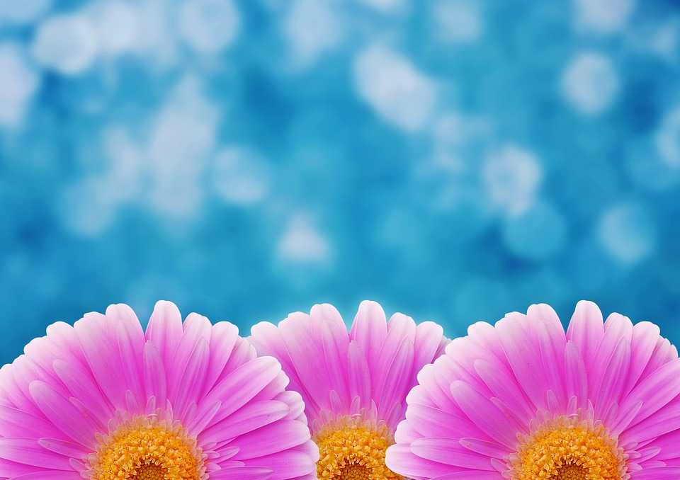Flower, Pink, Bokeh, Blossom, Bloom, Gerbera, Spring