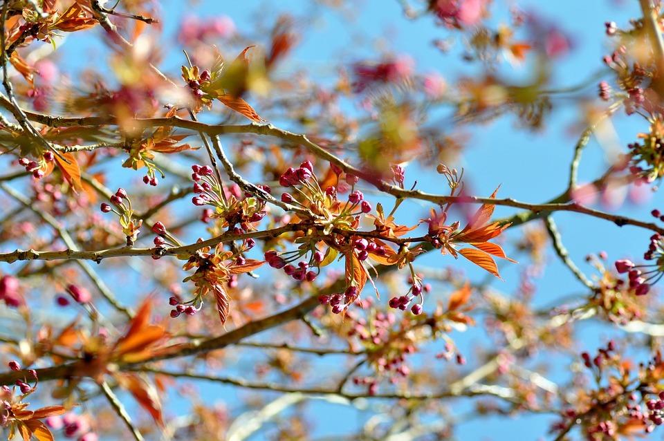 Flowers, Nature, Floral, Plant, Spring, Bloom, Pink