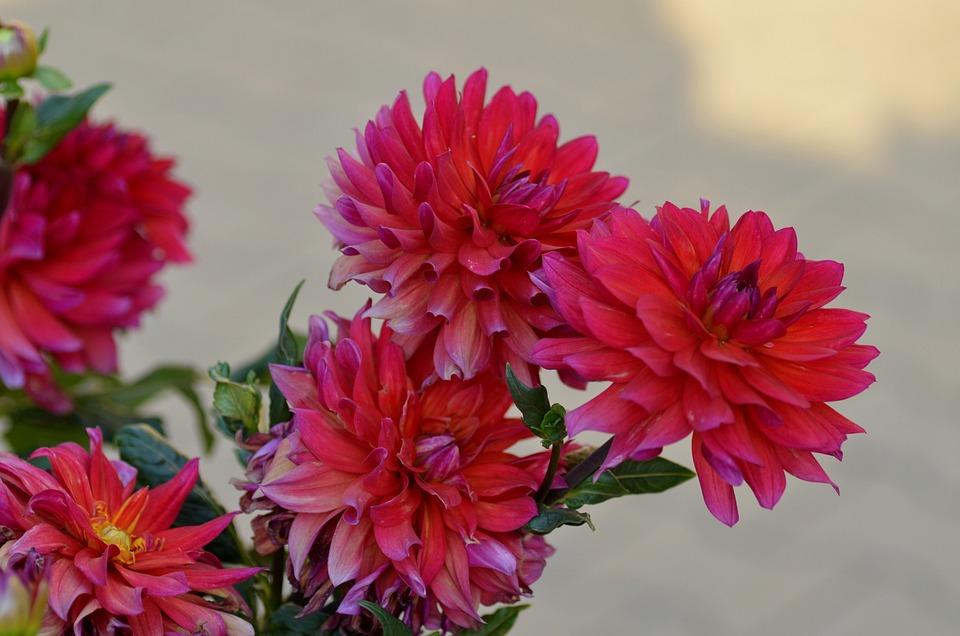 Flowers, Red, Pink, Public Garden, Spring, Summer