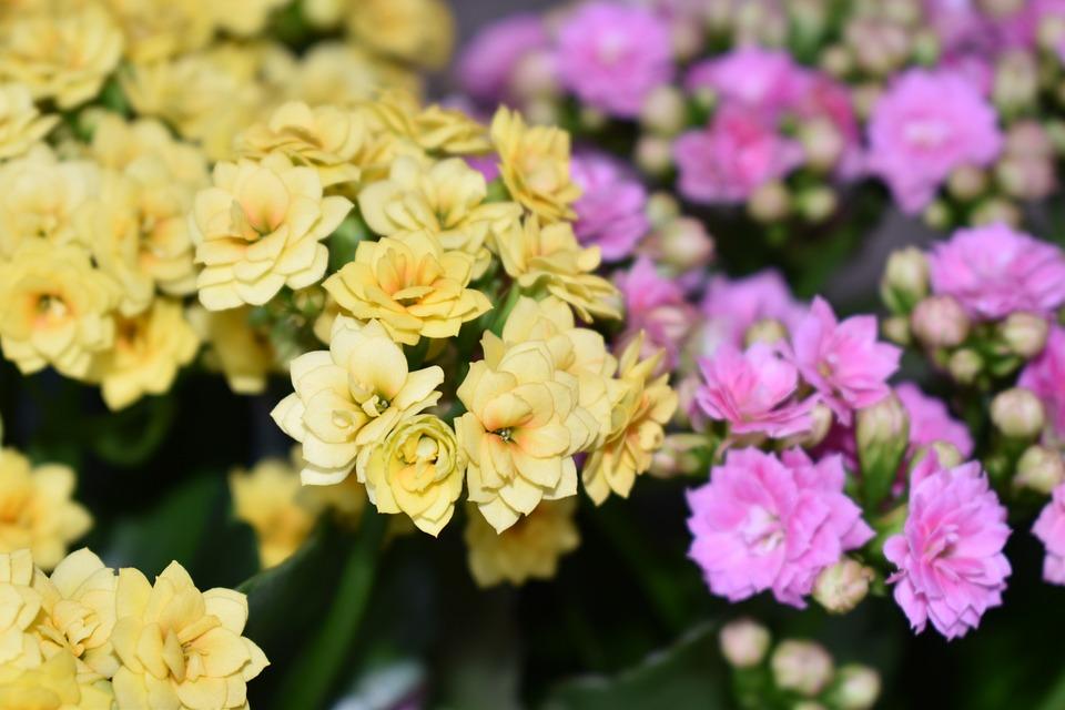 Flowers, Spring, Nature, Bloom, Blossom, Summer, Pink