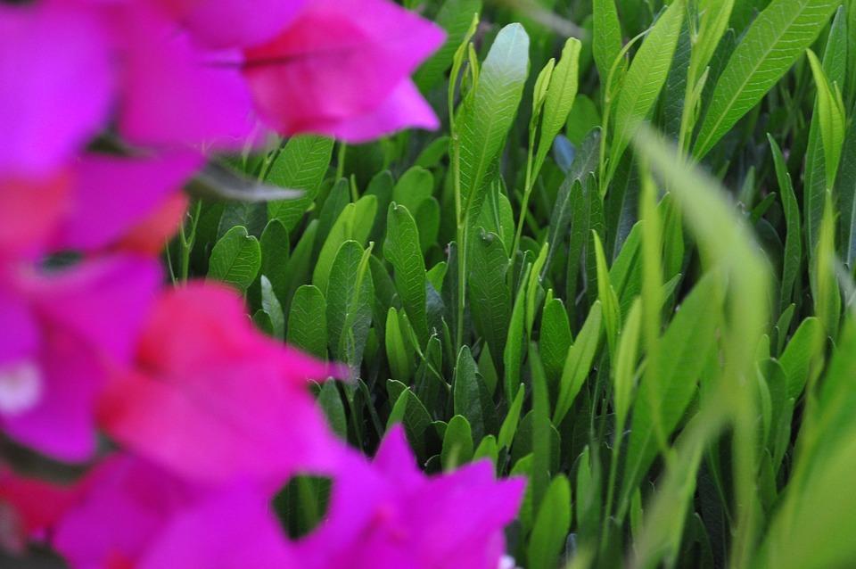 Green, Flower, Nature, Spring, Bloom, Summer, Plant