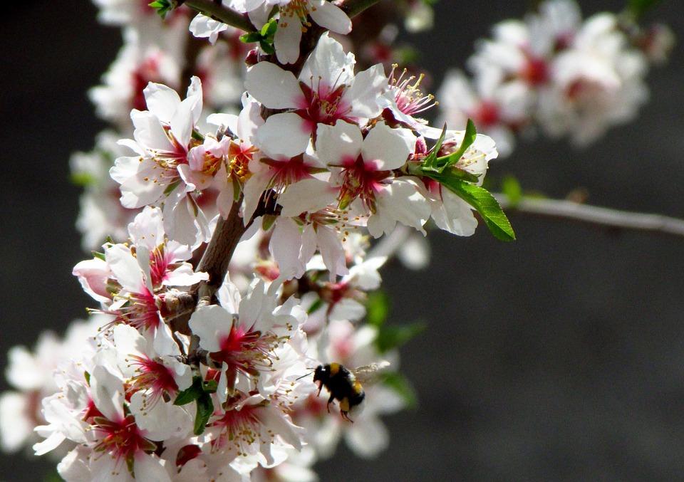 Flower, Bee, Spring, Plant, Costa Brava, Catalonia