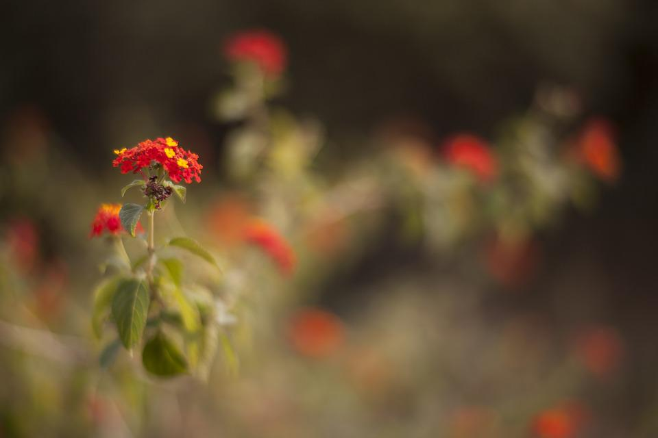 Flower, Nature, Plant, Spring, Spring Flowers, Flowers