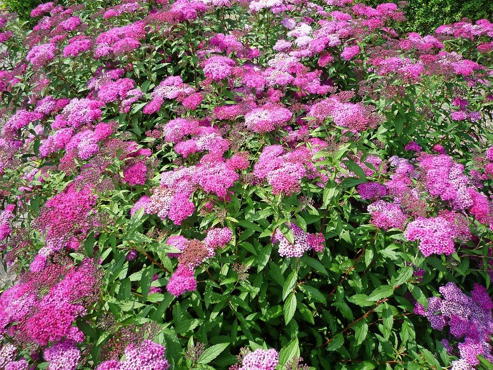 Flowers, Plant, Blossom, Bloom, Flower, Nature, Spring