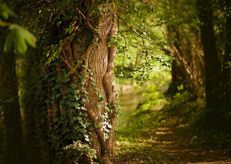 Spring, Forest, Plant, Nature, Tree